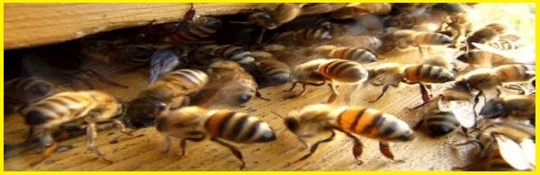 Le tue api